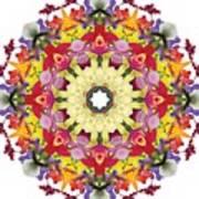 Abundantly Colorful Orchid Mandala Art Print