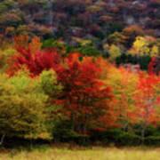 Acadia Colors Art Print