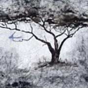Acasia Tree Art Print