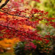 Acer Colors Art Print