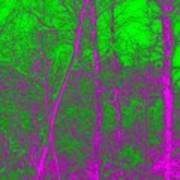 Acid Forest Art Print