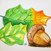 Acorn And Leaves Art Print