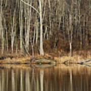 Across Skymount Pond - Autumn Browns Art Print