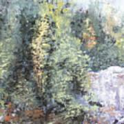 Across The Ravine Art Print
