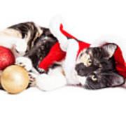Adorable Christmas Calico Santa Kitty Art Print
