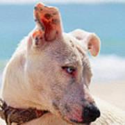 Adorable Small Dog On The Beach Art Print