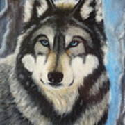 Adult Grey Wolf Art Print