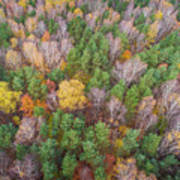Aerial View Of The Forrest With Different Color Trees.  Art Print