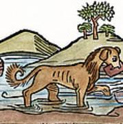 Aesop: Dog & Shadow, 1484 Art Print