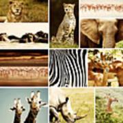African Animals Safari Collage  Art Print by Anna Om
