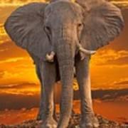 African Bull Elephant At Sunset Art Print
