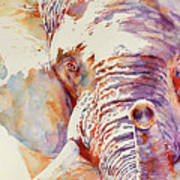 African Elephant _ The Governor Art Print
