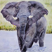 African Elephant Crossing The Chobe River Art Print
