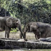 African Elephants_hdr Art Print