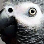 African Gray Parrot Art - Softy Art Print