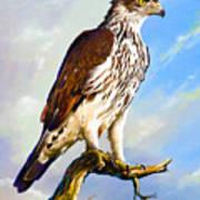 African Hawk Eagle Art Print