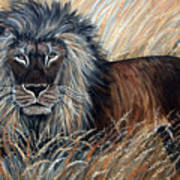 African Lion 2 Art Print by Nick Gustafson