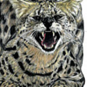 African Serval Art Print