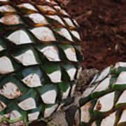 Agave Pineapples Art Print
