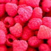 Agenda For Today ... Raspberry Jam Print by Gwyn Newcombe