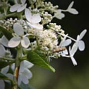 Ailanthus Webworm Moth 1 Art Print