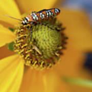 Ailanthus Webworm Moth #5 Art Print