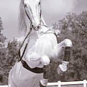 Airs Above The Ground - Lipizzan Stallion Rearing Art Print