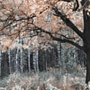 Airy Autumn In Woods Art Print