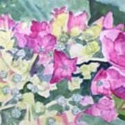 Ajisai Color-magenta Art Print