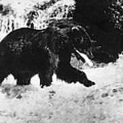 Alaska: Brown Bear Art Print