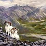 Alaskan  Dalls Sheep Art Print