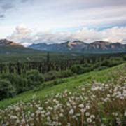 Alaskan Dandelions  Art Print