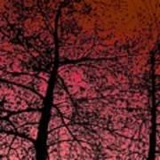 Alder Trees Against The Winter Sunrise Art Print
