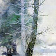 Alders And Cedar Art Print