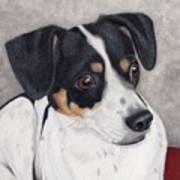 Alert Little Rat Terrier  Art Print