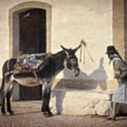 Algarve Donkey Art Print