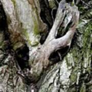 Alien In The Tree Art Print