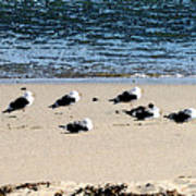 All My Gulls In A Row Art Print