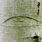 All-seeing Eye Of God On A Tree Bark Art Print