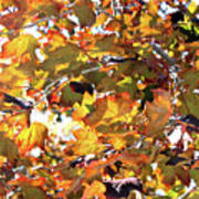 All The Leaves Are Red And Orange Fall Foliage With Sunshine Art Print