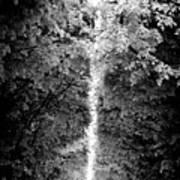 Allee_des_arbres Art Print