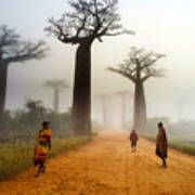 Alley Of The Baobab Art Print
