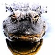 Alligator Fangs 2 Art Print