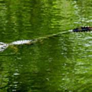 Alligator In Wait Art Print