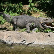 Alligator Surprise Art Print
