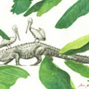 Alligator With Pelicans Art Print