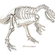 Allosaurus Skeleton Art Print