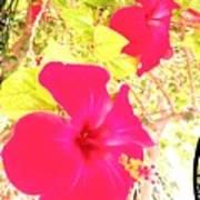 Almeria Flowers Art Print