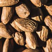 Almond Nuts Art Print
