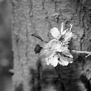 Almond Orchard 2 Art Print
